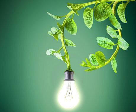 استفاده از گیاهان در فراوری برق